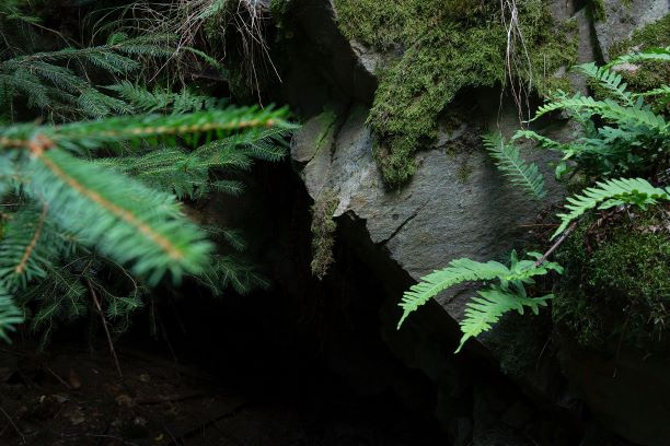 cave-environment-fern-1251052